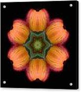 Orange Daylily Flower Mandala Acrylic Print by David J Bookbinder