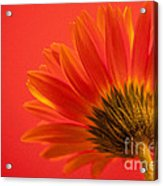Orange Delight Acrylic Print