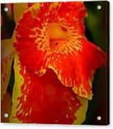 Orange Delight Acrylic Print by Debra Forand