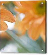 Orange Design. Paintrly Chrysanthemum  Acrylic Print