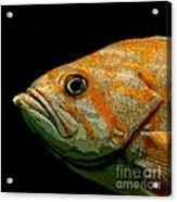 Orange Fish Acrylic Print