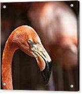 Orange Flamingo Acrylic Print