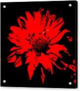 Orange Flower Burst  Acrylic Print