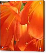 Orange Flower Petals Acrylic Print