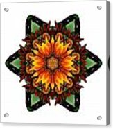 Orange Gazania IIi Flower Mandala White Acrylic Print