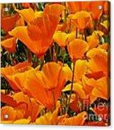 Orange Glimmer Acrylic Print