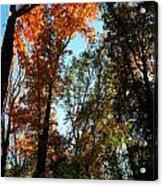 Orange Glowing Tree Acrylic Print