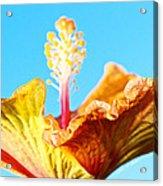 Orange Hibiscus Texture I Acrylic Print