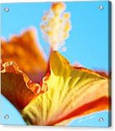 Orange Hibiscus Texture II Acrylic Print