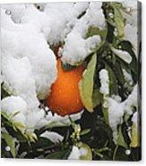 Orange In Snow Acrylic Print