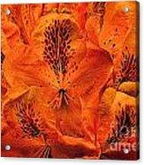 Orange Is In Acrylic Print