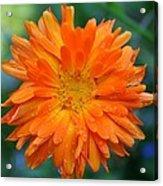 Orange Juice Acrylic Print