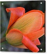 Orange Lady Acrylic Print