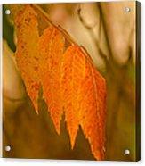 Orange Leaves Of Fall Acrylic Print