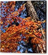 Orange Maple Acrylic Print