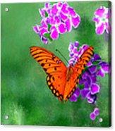 Orange Monarch Butterfly Acrylic Print