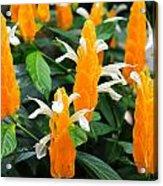 Orange Of Flowers Acrylic Print