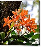 Orange Orchid Acrylic Print
