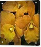 Orange Orchid Group Acrylic Print