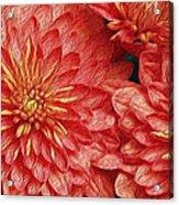 Orange Petals Acrylic Print