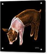 Orange Piglet - 0878 F Acrylic Print