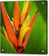 Orange Pocket Fold Acrylic Print
