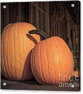 Orange Pumpkins Acrylic Print
