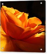Orange Rose Glowing In The Night Acrylic Print