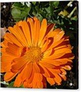 Orange Ruffles Acrylic Print
