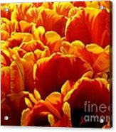 Orange Sea Acrylic Print