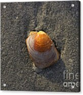 Orange Seashell Acrylic Print