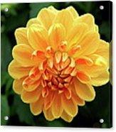 Orange Sun Acrylic Print