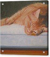 Orange Tabby Cat Acrylic Print