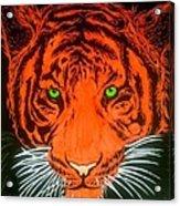 Orange Tiger Acrylic Print
