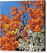 Orange Tree Acrylic Print