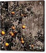 Orange Tree On Rustic Background Acrylic Print