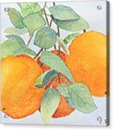Orange Trio Acrylic Print