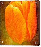 Orange Tulip Brown Texture Acrylic Print