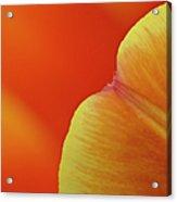 Orange Tulip Petal Detail Acrylic Print