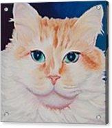 Orange White Cat Portrait Acrylic Print