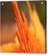 Orange Wood Fragment On Stump Acrylic Print