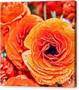 Orange You Happy Ranunculus Flowers By Diana Sainz Acrylic Print