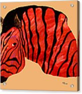 Orange Zebra Acrylic Print