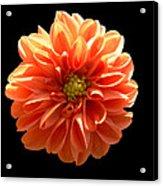 Orangeman Acrylic Print