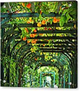 Oranges And Lemons On A Green Trellis Acrylic Print