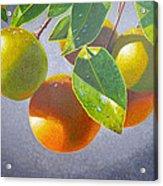 Oranges Acrylic Print by Carey Chen
