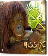 Orangutan Female Acrylic Print