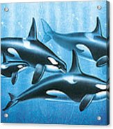Orca Group Acrylic Print by JQ Licensing