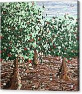 Orchard 4 Acrylic Print