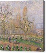 Orchard At Pontoise Acrylic Print